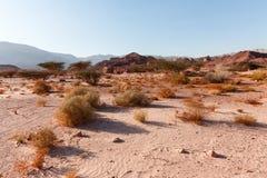 De Woestijn van Negev, Israël Stock Foto