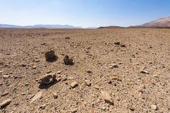 De Woestijn van Negev in Isra?l stock foto