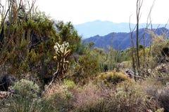 De Woestijn van de palm royalty-vrije stock afbeeldingen