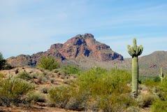De Woestijn van Sonoran stock afbeeldingen