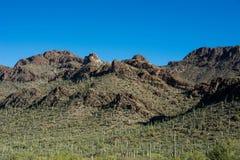 De Woestijn van Sonoran Royalty-vrije Stock Afbeeldingen
