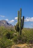 De Woestijn van Tucson Arizona stock afbeeldingen
