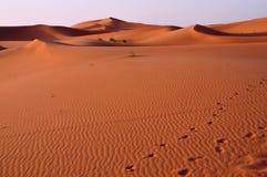 De woestijnduinen van Marokko Stock Foto