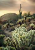 De woestijnlandschap van Arizona Stock Afbeeldingen