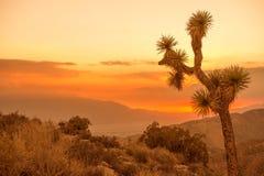 De Woestijnlandschap van Californië Stock Afbeeldingen