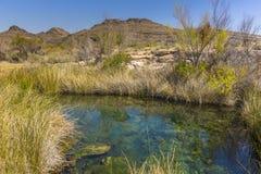 De woestijnlente in Ash Meadows National Wildlife Refuge, Nevada Stock Afbeeldingen