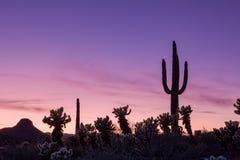 De Woestijnzonsondergang van Arizona stock foto