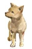 De wolf van het puppy Stock Foto's