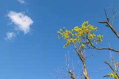 De wolk en de boom vertakken zich op de hemelachtergrond Stock Afbeelding
