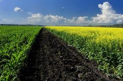 De wolk over maïs Royalty-vrije Stock Afbeeldingen