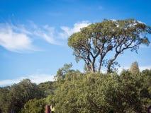 De wolk van de hemelboom Royalty-vrije Stock Afbeelding