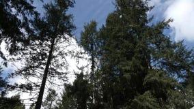 De wolken bouwen en bewegen zich tegen heldere blauwe hemel in de zomer stock footage