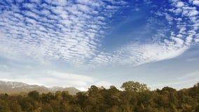 De wolken van de tijdtijdspanne over het de herfstbos stock video