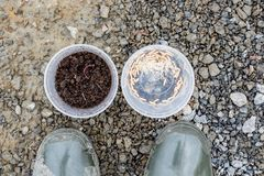 De worm en bederft het aas voor visserij Royalty-vrije Stock Afbeeldingen