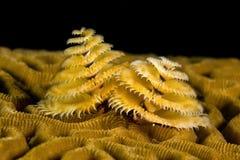 De Worm van de kerstboom Stock Foto's