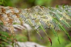 De wormen en de spinnen zijn op het blad royalty-vrije stock afbeeldingen