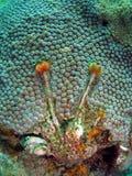 De Wormen van het koraal en van de Kerstboom Stock Afbeelding