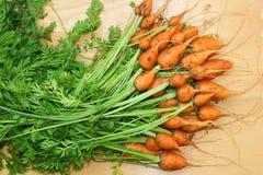 De wortel van Daucuscarota Royalty-vrije Stock Fotografie