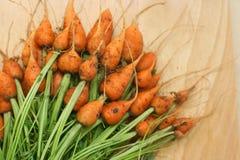De wortel van Daucuscarota royalty-vrije stock foto's