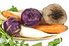 De wortel van de winter veggies Stock Afbeelding
