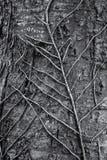 De wortel van een installatie op een boomstam royalty-vrije stock foto