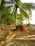 De wortels & de varenbladen van de palm Stock Afbeelding