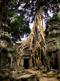 De Wortels die van de Banyanboom Tempeldeur behandelen Stock Fotografie