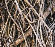 De wortels van de Banyanboom, sluiten omhoog geweven achtergrond royalty-vrije stock afbeeldingen