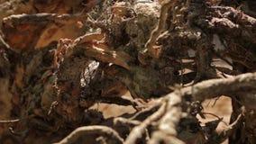 De wortels van de boom stock footage