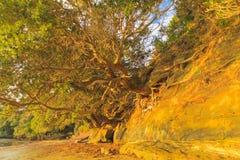 de wortels van de bomen op de klip Royalty-vrije Stock Foto