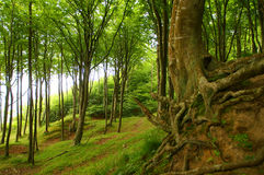 De wortels van de boom Royalty-vrije Stock Foto's