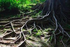 De wortels van de boom Stock Foto