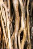 De wortels van de boom Royalty-vrije Stock Afbeelding