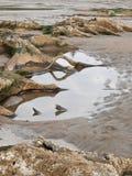 De wortels van de boom die op zandig oceaanstrand worden blootgesteld Stock Afbeelding
