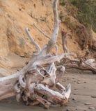 De wortels van de dode boom planden golf Stock Fotografie