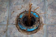 De Wortels van de het Toiletflens van het loodgieterswerkprobleem Stock Foto