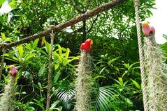 De wortels van de orchidee Royalty-vrije Stock Afbeeldingen
