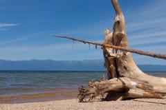 De wortels van drijvend droog hout met een mooie textuur op de meerkust stock afbeeldingen