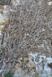 De wortels van een boom. Royalty-vrije Stock Foto's