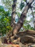 De wortels van een tropische boom stock afbeelding