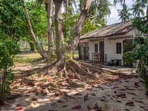 De wortels van een tropische boom stock foto's