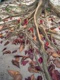 De wortels van een tropische boom stock afbeeldingen