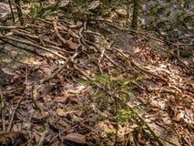 De wortels van een tropische boom stock foto