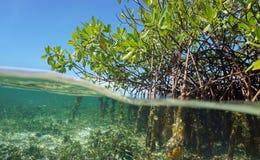 De wortels van mangrovebomen boven en onder het water royalty-vrije stock foto