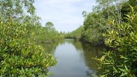 De Wortels van de mangroveboom in Slow-moving Wateren staan Fijne Sedimenten toe om te accumuleren stock videobeelden