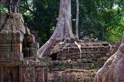 De wortels van vijgeboom in Angkor-tempel Stock Fotografie