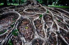 De wortelsboom toont aardachtergrond Stock Afbeeldingen