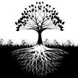 De wortelssilhouet van de boom Stock Fotografie