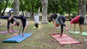 De yoga van de mensenpraktijk, geschiktheidsopwarming in openlucht, yogaklasse in openlucht, gezonde levensstijl, gezonde vrouwen stock videobeelden