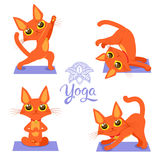 De yogakat stelt Yoga Cat Vector Yoga Cat Meme Stock Afbeelding